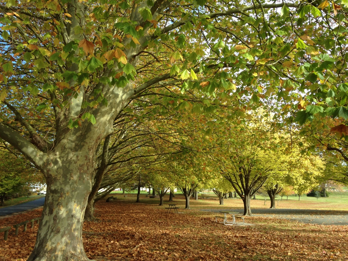 Millbrook Park in Autumn, Tenterfield