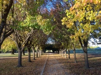 Autumn in Tenterfield