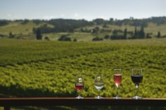 Kurrajong Downs Winery - Photo by Paul Foley; Destination NSW